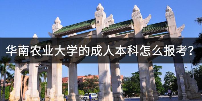 华南农业大学的成人本科怎么报考?
